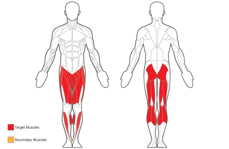 Build Your Leg Muscles